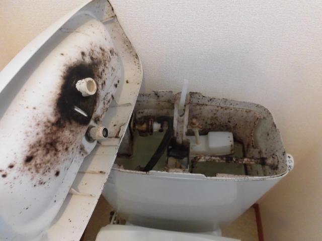 綺麗なトイレ。カビの臭いはどこから?